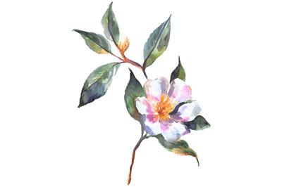 Watercolor rosehip sketch