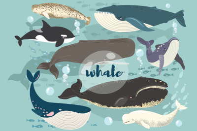 Whale Collections Set