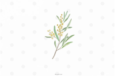 Watercolor olive branch clip art