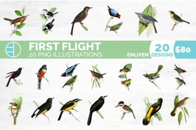 Bird Bundle (20 Birds)
