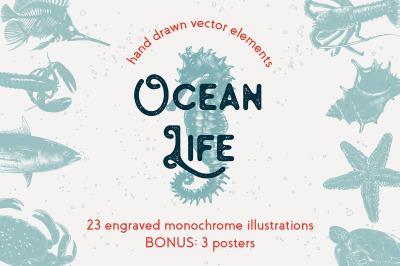 Ocean life hand drawn sketches