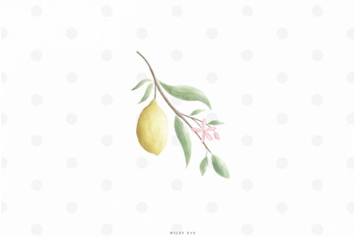 Watercolor lemon branch clip art