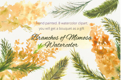 Branches of Mimosa Watercolor clipart