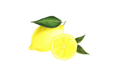 Lemons composition - hand drawn food, botanical illustration