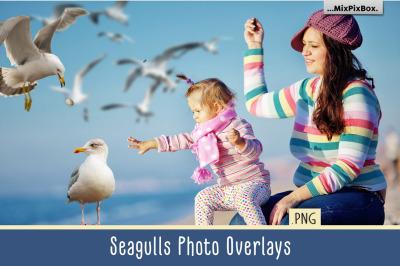Seagulls Photo Overlays