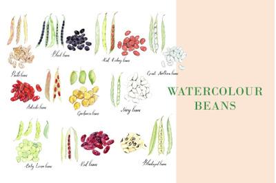 Watercolour Beans illustration, PNG