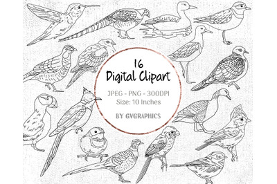 16 Hand Drawn Birds Digital Clipart Set 1