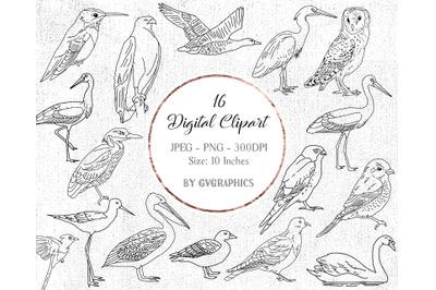 16 Hand Drawn Birds Digital Clipart Set 2
