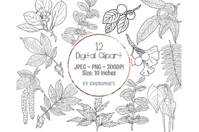 12 Hand Drawn Branches, Leaves and Berries Digital Clipart Set 1