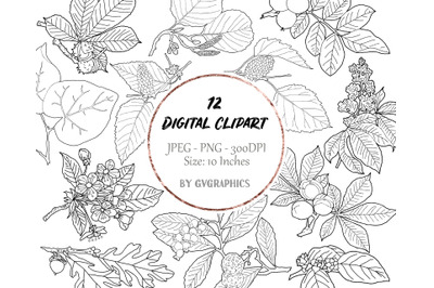 12 Hand Drawn Branches, Leaves and Berries Digital Clipart Set 3