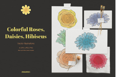 Colorful Roses, Daisies and Hibiscus Vector Illustrations