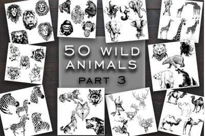 50 wild animals vector part 3