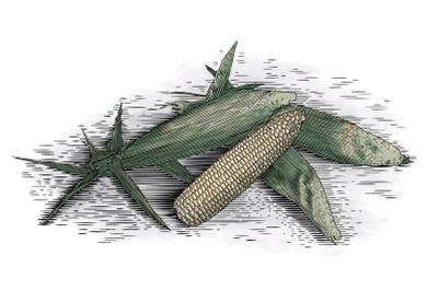 Woodcut Corn Cobs