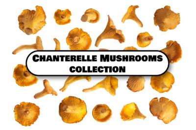 Chanterelle Mushrooms Set