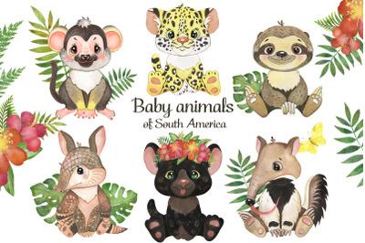 Baby animals clipart. South American animals Safari animals watercolor