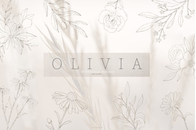 Olivia botanical sketch vectors, hand drawn, illustrations,