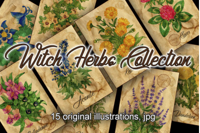 Witch herbs collection