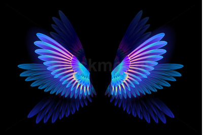 Glowing Hummingbird Wings