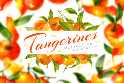 Tangerines watercolor clip art
