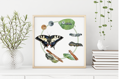 Swallowtail Butterfly Life Cycle Clip Art and Print