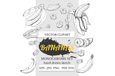 Hand drawn ink sketch of banana plant. Banana art.