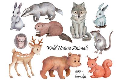 Wild nature animals. Watercolor illustrations.