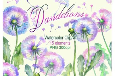 Watercolor dandelions clipart  dandelion clip art  leaves flowers png