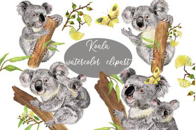 Koala clipart. Watercolor animal clipart. Koala Family. Australia
