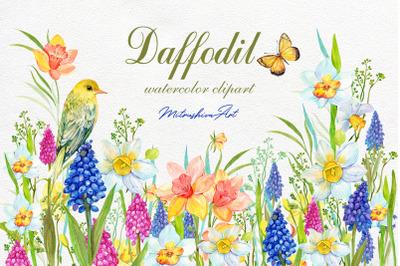 Daffodil Clipart, Watercolour  Digital Narcissus Clip art ,