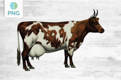 Cow Clipart Ayrshire