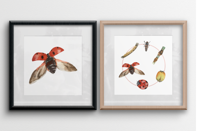 Ladybug Life Cycle Clip Art and Print