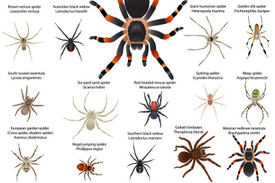 Spiders colour