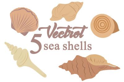 marine sea shell illustration on summer print
