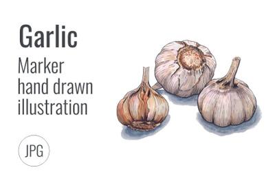 Garlic. Hand drawn marker illustration