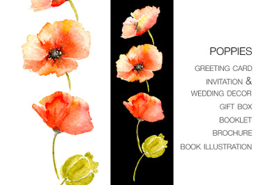 Poppy in 4 design elements  for future cards, invitation and wedding