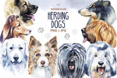 Watercolor herding dogs