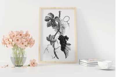 Black and White Vintage Vine Branch, Vine Digital Botanical