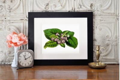 Retro Botanical Illustration, Wedding Invitation Flower