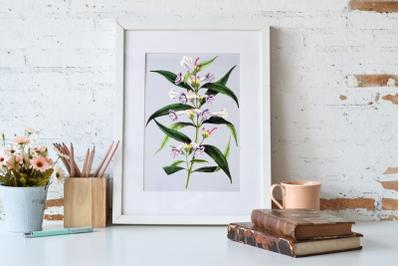 Vintage Pink Flower Clipart, Pink Flower, Retro Botanical