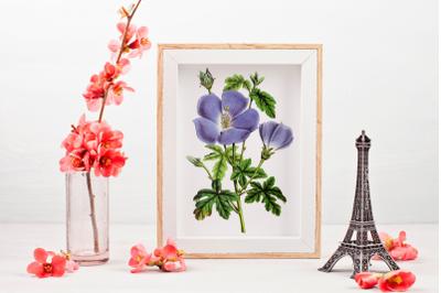 Vintage Purple Flower Clipart, Purple Flower, Retro Botanical