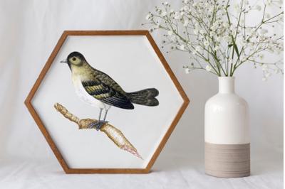 Vintage Bird Illustration, Vintage Bird Clipart, Retro Bird