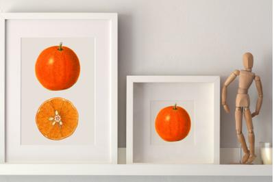 Fruit Clipart, Illustration Kitchen Decor, Vintage Orange