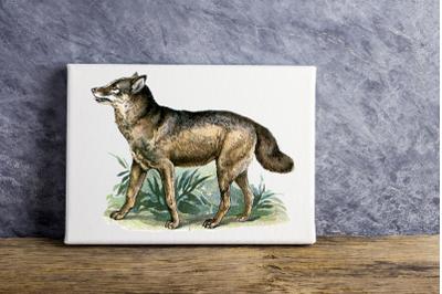 Vintage Coyote Illustration, Vintage Antique French Decor