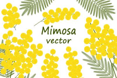Set of mimosa vector illustrations