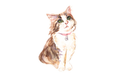 Watercolor and pencil kitten illustration
