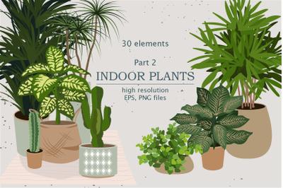 Indoor Plants | House plants