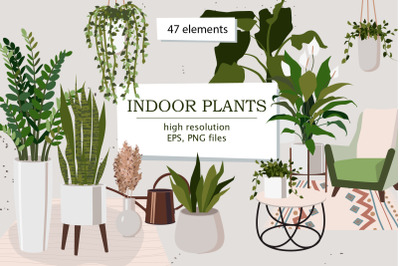 Indoor Plants | Part 1