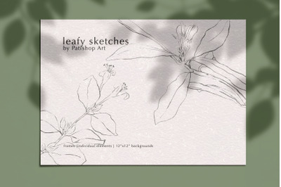 Leafy Sketches in Pencil Hand Drawn Illustrations