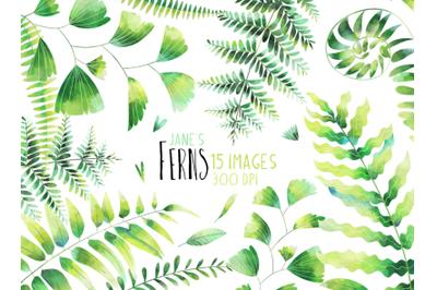 Watercolor Ferns Set