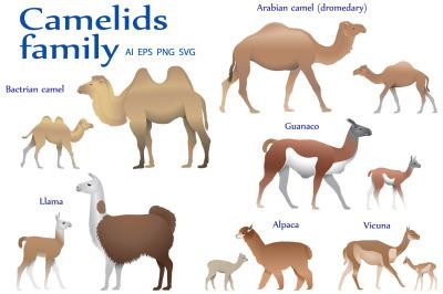 Camelids family colour